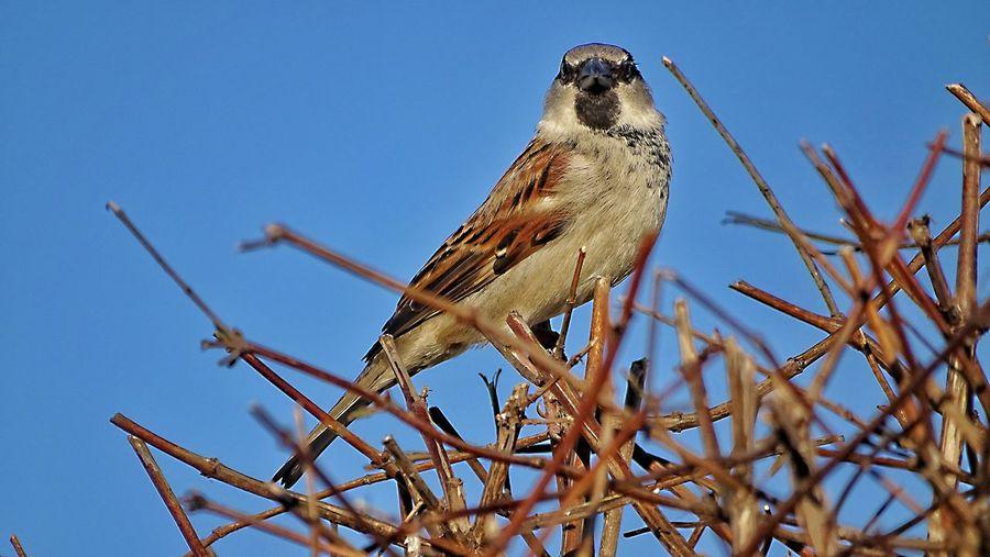 sparrow Autumn