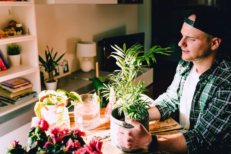 Young man while taking care of small kentia plant on rustic wooden table