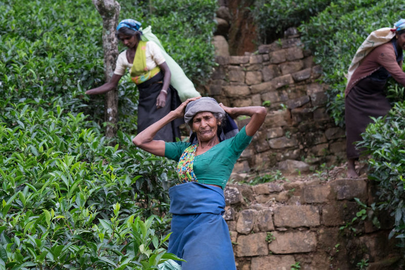 Tea pickers Adult Adventure Child Community Outreach Day Females Fun Happiness Hiking Horizontal Looking At Camera Nature Only Women Outdoors People Person Portrait Smiling Young Adult Young Women