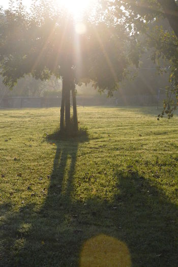 Sunlight Tree Plant Nature Grass Sunbeam Day Lens Flare Shadow Sun Land Growth Beauty In Nature Sunny Field Tranquility Tranquil Scene Park Landscape No People Outdoors Streaming Solar Flare