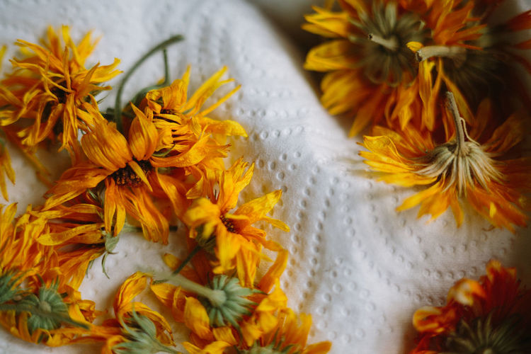 Close-up of marigold flowers on tissue paper