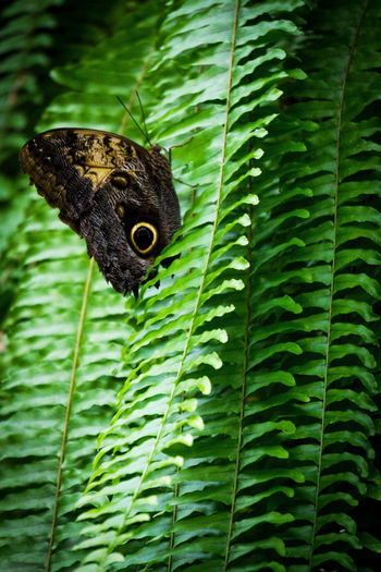 I blend in here right? Animal Themes Animal Wildlife Animals In The Wild Butterfly Butterfly - Insect Close-up Day Fragility Gastropod Giant Owl Butter Green Color Insect Leaf Nature No People One Animal Outdoors Plant