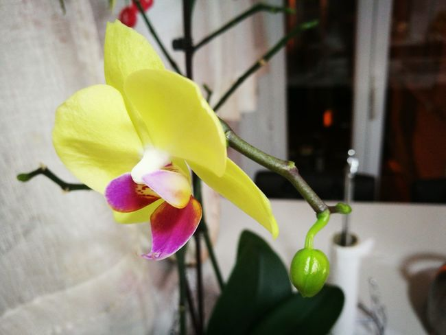 Flower Close-up Plant Fragility Petal Flower Head Freshness Growth Nature Orquídea❤