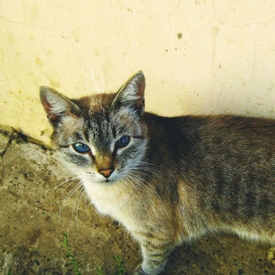 кот кошки Mimimi кошка Cat Cats My Pets Catsagram Kitten моя киса котэ Katze мимими