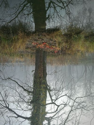 Stranger things. Nature Water Tree No People Day Outdoors Bare Tree Reflection Debreceni Nagyerdő Upside Down Foggy Cold Weather Upsidedown Having Fun! Mysterious Mysterious Landscape Pond Cloudy Day