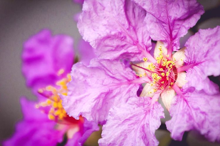 Flowers Closeup Nature Blood Canon EOS 60D Canon 70 - 300 Mm.