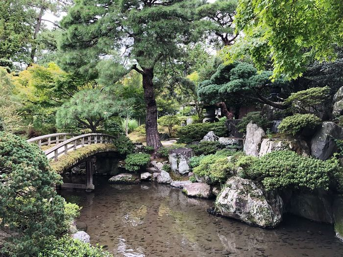 Little garden in the backyard. Pond Plant Growth Green Color Day No People Nature Beauty In Nature Tree Water Built Structure