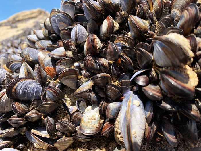 Mussel bed
