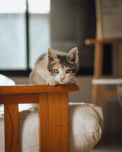 Portrait of kitten by cat at home
