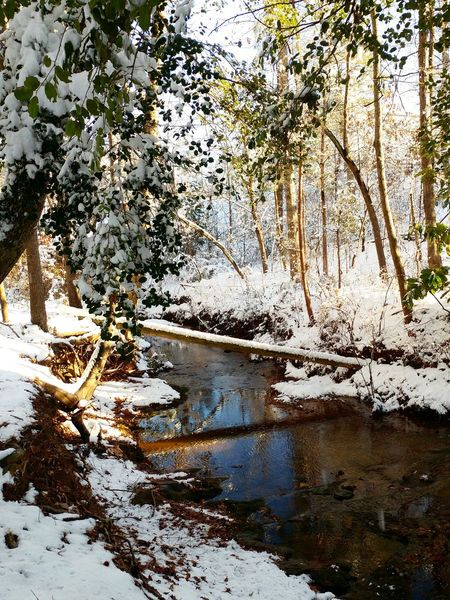 Winter Creek Stream Water Snow Wintertime Hello World Check This Out Morning Light Light And Shadow River Creekside NC Sanford Nature Nature Photography Wood Reflection Water Lake Nature Outdoors Day Tree No People Beauty In Nature Tranquility Scenics Sky