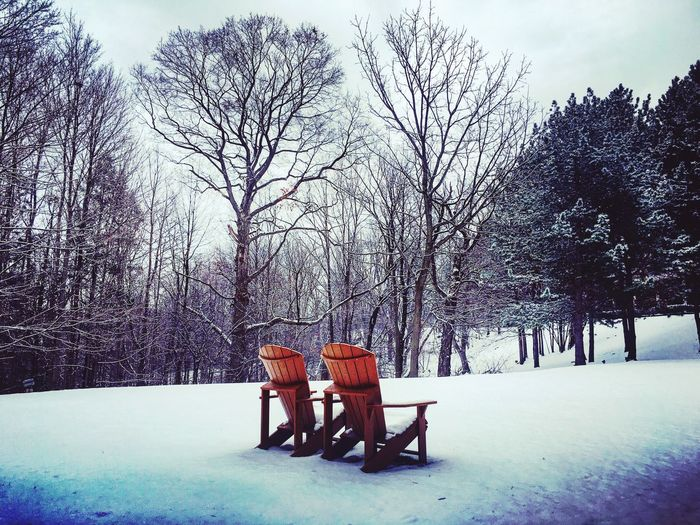 Empty Chair Empty Empty Chairs Muskoka Chairs Snow Trees Outdoors Park Snowy Winter April2016 April Showcase Westinhotel Westin Nature Toronto Canadsa Showcase April Adapted To The City