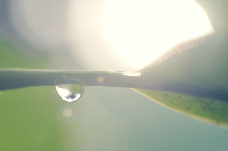 Dew First Eyeem Photo
