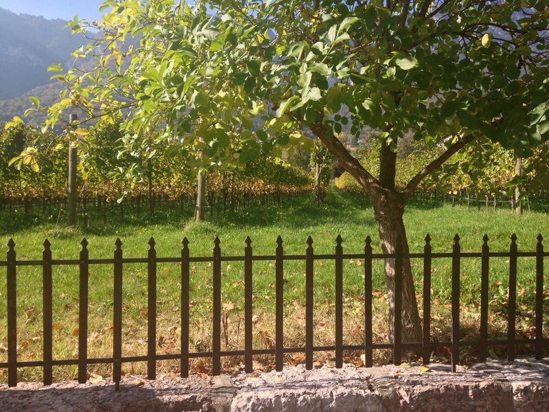 284/365 October 11 One Year Project 2017 Vineyard Winery Caldaro Weinstraße South Tyrol Trentino Alto Adige Südtirol Alto Adige Italy Fence Tree Field Growth No People Outdoors Day Agriculture Rural Scene Green Color Nature Scenics Beauty In Nature Sky