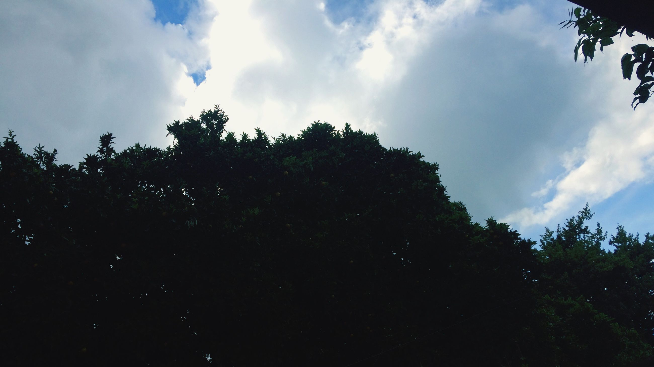 tree, sky, low angle view, growth, silhouette, tranquility, scenics, nature, tranquil scene, beauty in nature, cloud - sky, cloud, branch, day, blue, high section, outline, outdoors, green color, cloudy, treetop, lush foliage, majestic, non-urban scene, no people