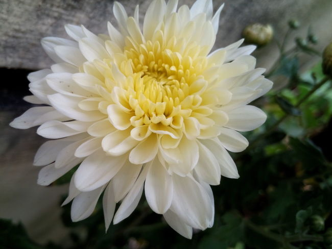 Freshness Flower Beauty In Nature Close-up Single Flower In Bloom Exoticism