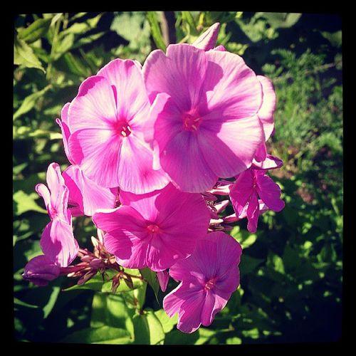 Пока дочь спала, перестала все цветы)))