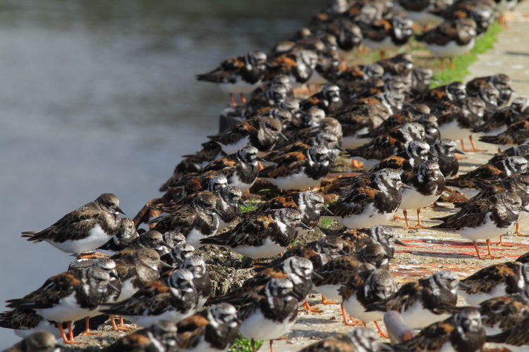 High angle view of birds perching on pier