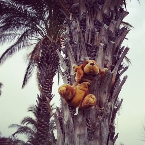 Chasing a Squirrel up a Palm Tree . D üden lara park antalya instapup picoftheday Puppy