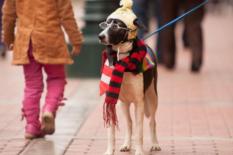 Dog Wearing Eyeglasses And Muffler