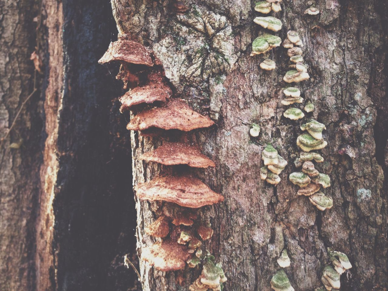 tree trunk, textured, rough, wood - material, day, no people, close-up, outdoors, fungus, bark, tree, nature