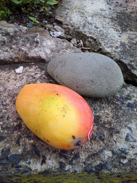 The shape is the same, but the content is different! Fruit Mango Stone Juisy Same  Similar Shape Form Contrast Two Things Sweet Solid Colour Of Life Soft Colour Grey Two Is Better Than One Opposites Contrasts Funny Pivotal Ideas The OO Mission Inanimate TakeoverContrast