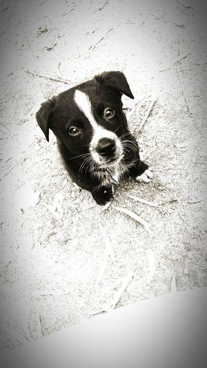 Puppy Puppyeyes Puppy Love Adorable! PuppyFace Puppy Lovin