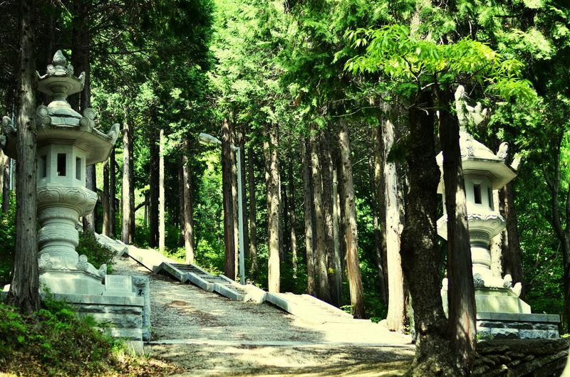 Nature In The Forest Forest There Is Always A Way Travelling Travel Photography Landscapes With WhiteWall