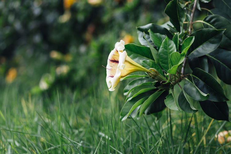 Flower blooming on grassy field