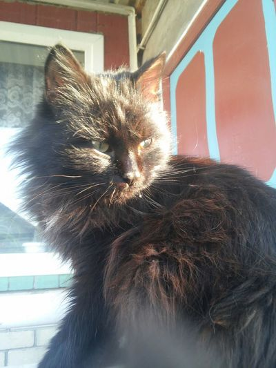 🐱 Photo фото Russia Россия Animals животные Cats кошки солнечно Sunny Day