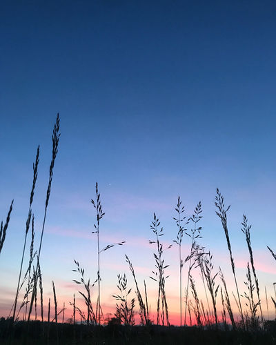 Low angle view of silhouette plants on field against sunset sky