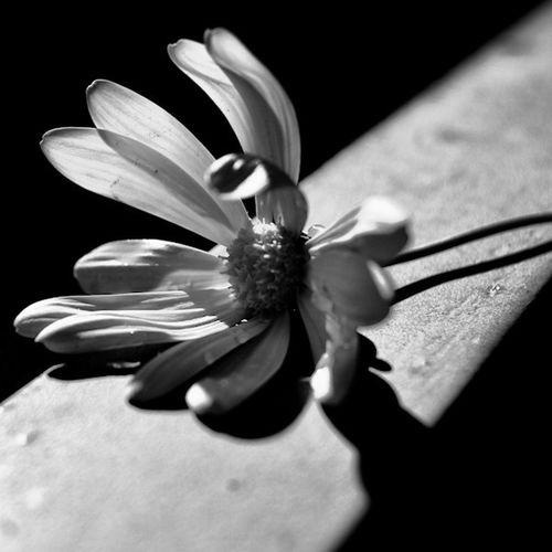 Just flower... Good weekend! EyeEm Best Shots Flowerporn EyeEm Best Shots - Black + White Blackandwhite