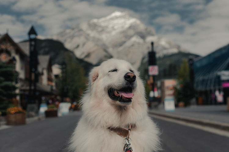 Close-up of dog looking away in city
