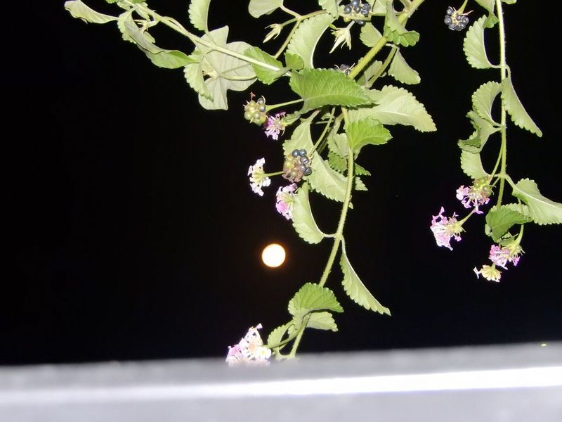 Nighttime Photography Foliage Comes Alive Experiment Moonlight Moon Collection August 2016