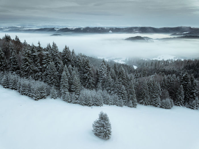 Cold Temperature Winter Snow Tree Beauty In Nature Tranquil Scene Scenics - Nature Plant Sky Tranquility Nature Cloud - Sky Non-urban Scene No People Environment Covering Land Landscape White Color Coniferous Tree Snowing Winter Landscape_Collection Wallpaper Nature