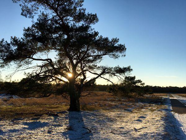 HarderwijkerBos Tree Sunlight Landscape