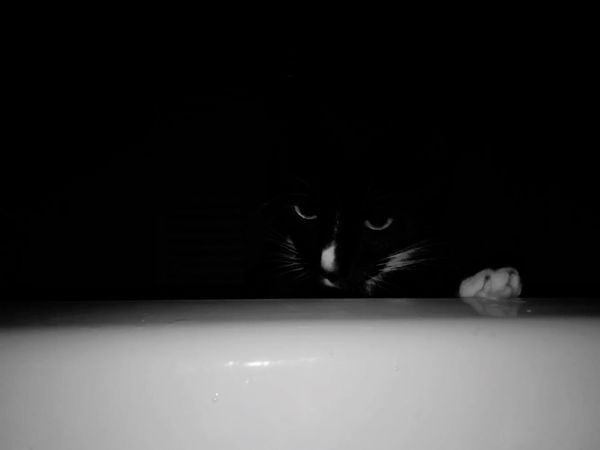 In plane sight Black And White Cat Eyes Domestic Cat Animal Themes One Animal Feline Pets Domestic Animals