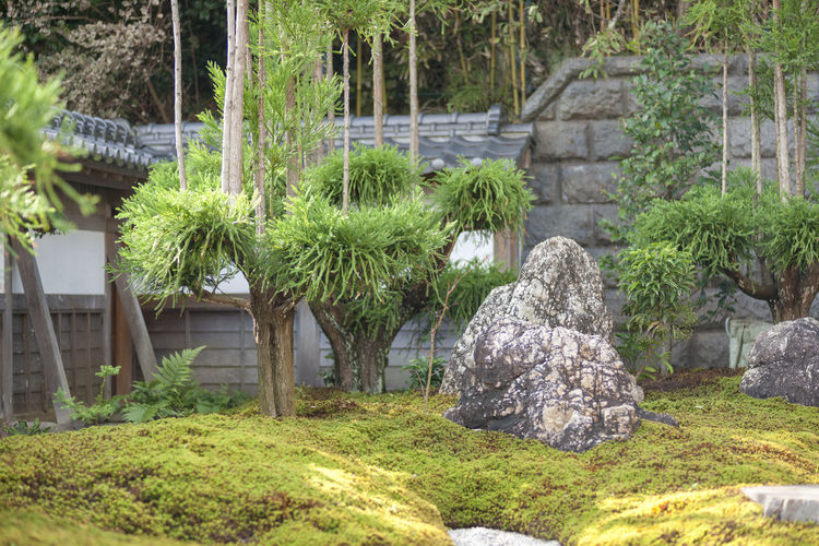 Plant Architecture Grass Solid Nature Tree Rock Built Structure Building Exterior Rock - Object Day Green Color No People Building Outdoors House Front Or Back Yard Garden Growth Stone Material Ornamental Garden Temple Of Japan Japanese Garden 日本庭園 α900