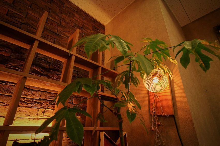 暖かな光……。 Relaxing 雑貨屋さん Enjoying Life 灯り 温もり 癒しの空間 心…休まる場所、欲しいね。どんな場所でもいいから……。