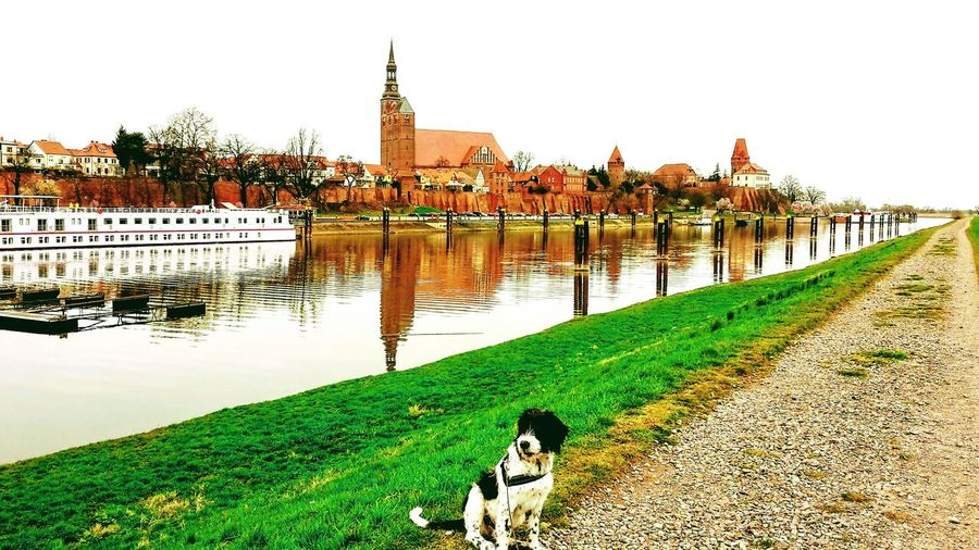 Tangermünde Outdoors Elbe River Irish Wolfhound Mix Border Collie Mix Hovawart Mix Hundefotografie Nature One Animal No People Dog Architecture
