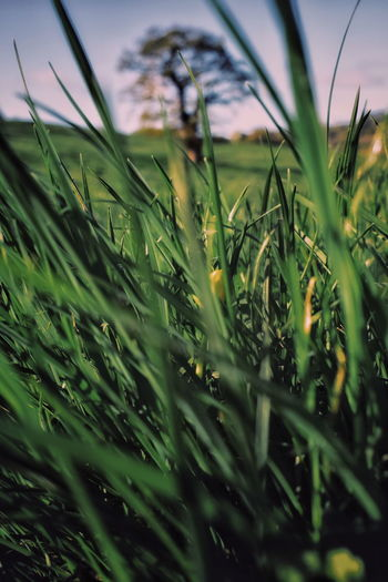 Grassy springtime Rural Scene Agriculture Close-up Grass Sky Green Color Plant