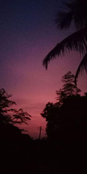 Sweet Evening Evening Sky Awesome Moment Of Life😍😍😍😌😌😌😻😻😻 Astronomy Galaxy Astrology Sign Milky Way Space Tree Star - Space Sunset Silhouette Constellation