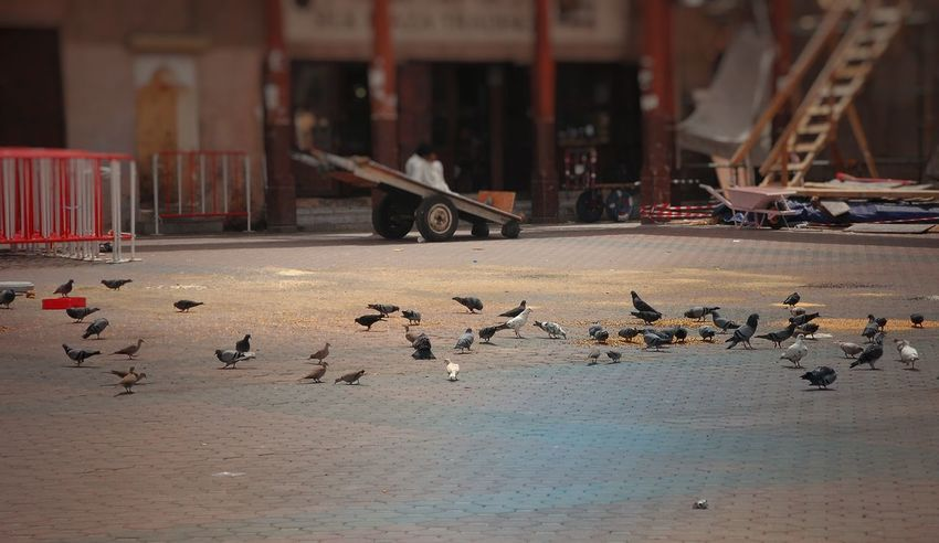 Birds of same feathers.. Animal Themes Bird Large Group Of Animals Flock Of Birds Outdoors Day No People Tourist Attraction  Tourist Attraction  @eyeemphilippines Bur Dubai EyeemPhilippines Street Photography City birds