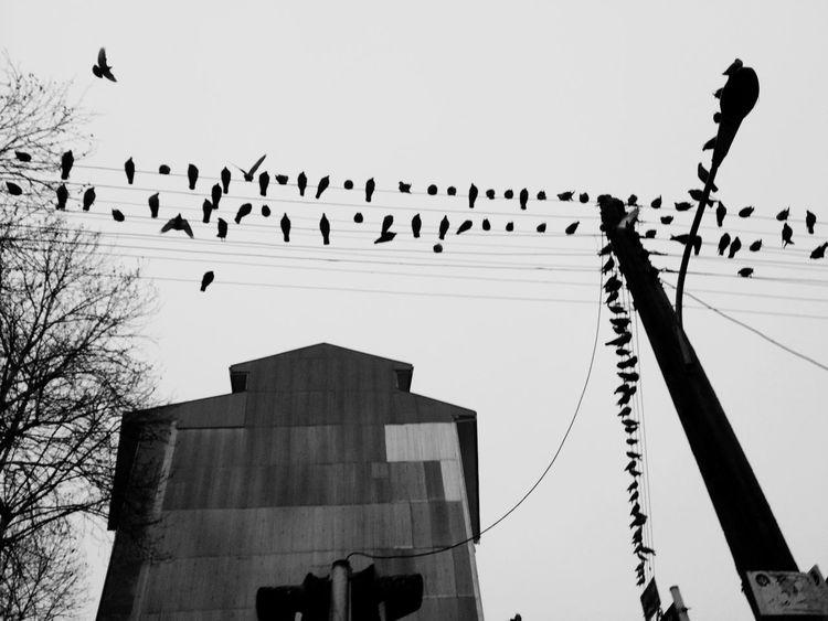 Birds Wires Sky Collection Family Soul Of Sky Rasht Beautiful Rasht Monochrome