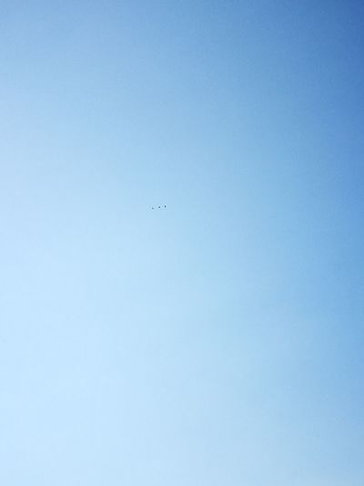 Flying Clear Sky Blue Sky 3LittleBirds Birds Three Sinai Nature Egypt Outdoors L