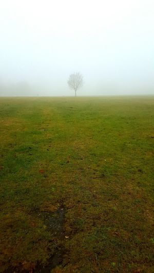 Foggy Morning Tree Landscape Outdoors Grass