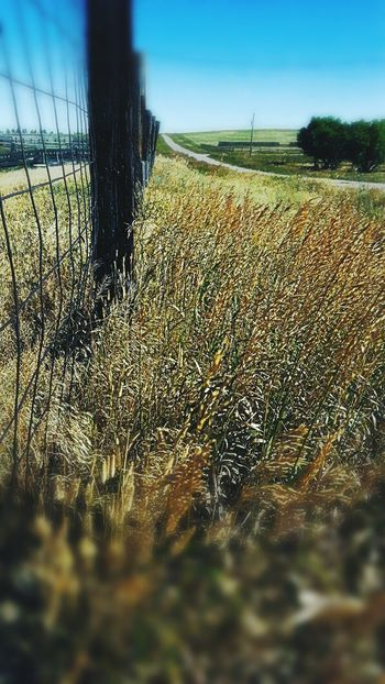 Fence line in the country side North Of Lusk Wyoming Tall Grass Blowing In The Wind Fence Near Corrals Out In The Country Beautiful Summer Morning United States