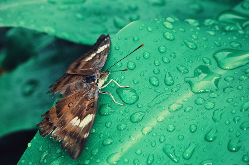 Animal Themes Animals In The Wild Animal Wildlife Butterfly EyeEm Gallery EyeEmNewHere EyeEm Nature Lover Ilustrasion EyeEm Selects Butterfly - Insect Insect High Angle View Close-up Animal Themes Green Color Animal Antenna Animal Wing Wildlife Animal Markings Leaf Vein