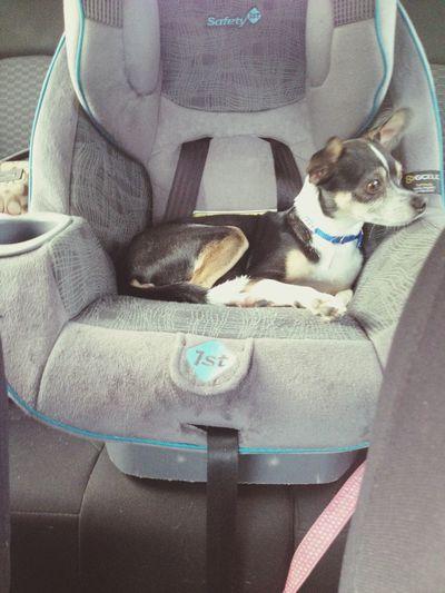 Love my dog! He's so spoiled!