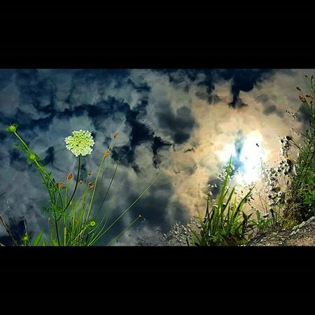 Cool picture from a hike a couple days ago. Kelleymediaproductions Hiking Hikingphotography Nature Naturephotography Pond Sky Reflection Flower Color Colorphotography Photography Photographersofinstagram Canon Canonphotography Canon7d  Stayrad