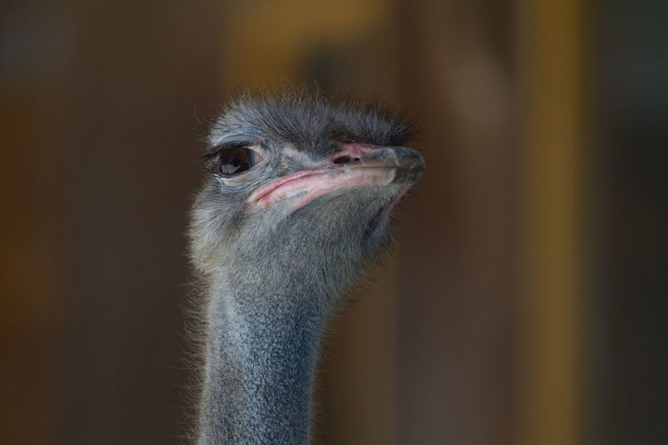 Close-up portrait of bird against blurred background
